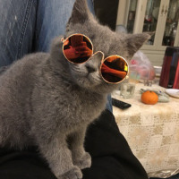 Dog Cat Pet Glasses For Pet Products Little Dog Eye-wear Dog Pet Sunglasses Photos Props Accessories Pet Supplies Cat Glasses - catdoglovers.com