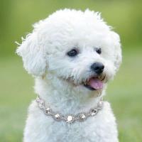 Rhinestone Dog Necklace Collar - Surge's Place